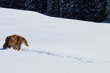 Adressen Hund Winter
